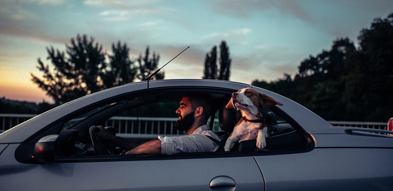 Man and his dog driving in the car